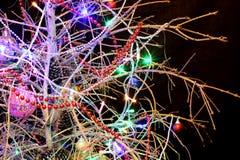 Weihnachtsbaum ohne Nadeln auf einem schwarzen Hintergrund Neues Jahr Lizenzfreies Stockfoto