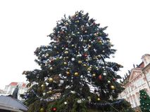 Weihnachtsbaum, Prag stockbilder