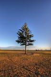Weihnachtsbaum-Sonnenaufgang Lizenzfreie Stockfotos