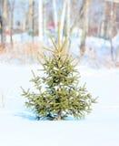 Weihnachtsbaum wächst in einem Winterpark Stockfotografie