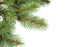Weihnachtsbaum-Zweigrand über Weiß Stockfotografie