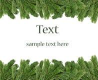 Weihnachtsbaum-Zweigrand Stockbild