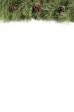 Weihnachtsbaumast und -stöße auf einem weißen Hintergrund mit copyspace Lizenzfreies Stockfoto