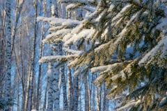 Weihnachtsbaumaste im Schnee lizenzfreie stockbilder