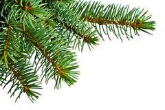 Weihnachtsbaumdetail über Weiß Stockbild