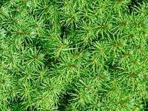 Weihnachtsbaumdetail stockfoto