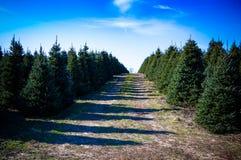 Weihnachtsbaumfarm Lizenzfreie Stockfotografie