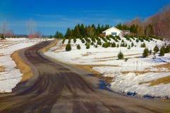 Weihnachtsbaumfarm Stockfotografie