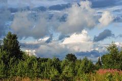 Weihnachtsbaumfarm mit Fichte und Tannenbäumen Sommerfrühlingslandschaft über drastischer Himmelwolke Stockfotos