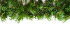 Weihnachtsbaumgrenze Stockfotografie