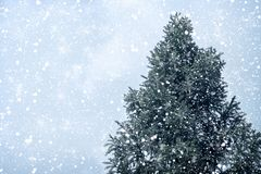 Weihnachtsbaumkiefer oder -tanne mit Schneefällen auf Himmelhintergrund im Winter Stockfotos