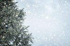 Weihnachtsbaumkiefer oder -tanne mit Schneefällen auf Himmelhintergrund im Winter Lizenzfreie Stockbilder
