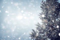 Weihnachtsbaumkiefer oder -tanne mit Schneefällen auf Himmelhintergrund im Winter Stockfotografie