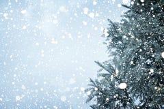 Weihnachtsbaumkiefer oder -tanne mit Schneefällen auf Himmelhintergrund im Winter Stockbilder