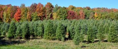 Weihnachtsbaumplantage stockbild