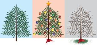 Weihnachtsbaumstadien Stockfotografie