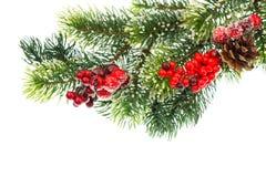 Weihnachtsbaumzweig mit roten Beeren lizenzfreies stockbild