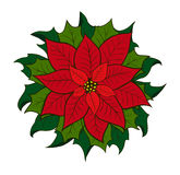 Weihnachtsblume Poinsettia Lizenzfreie Stockfotografie