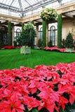 Weihnachtsblumenanzeige Stockfoto