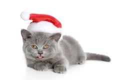 Weihnachtsbritisches Kätzchen in einem roten Hut Stockfotos