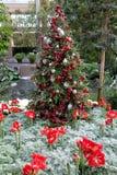 Weihnachtsdekoration in Longwood-Gärten Stockbilder
