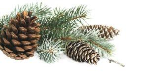 Weihnachtsdekoration mit Tannenbaum und Kegel auf einem weißen Hintergrund Stockfotos