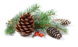 Weihnachtsdekoration mit Tannenbaum und Kegel lokalisiert auf einem weißen Hintergrund Stockbild