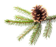 Weihnachtsdekoration - Tannenzweig mit vergoldetem Kegel Stockfoto