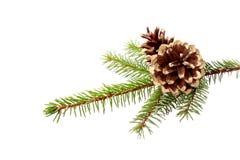 Weihnachtsdekoration - Tannenzweig mit vergoldeten Kegeln Stockfotografie