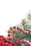 Weihnachtsdekorationen mit Zweig des Baums auf Weiß stockbild