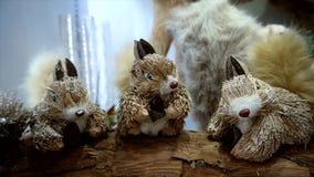 Weihnachtseichhörnchenanzeige stock video