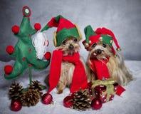 Weihnachtself-Yorkshire-Terrierhunde Stockfotos