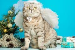 Weihnachtsengel ist- eine nette Katze, mit Flügeln auf dem Hintergrund eines verzierten Weihnachtsbaums Neues Jahr und glückliche lizenzfreie stockfotos