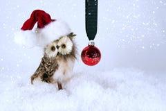 Weihnachtseule mit dem Sankt-Hut - horozontal Stockfoto