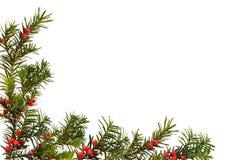 Weihnachtsfeld getrennt Stockfoto