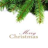 Weihnachtsfeld mit dem natürlichen Tannen-Baumast lokalisiert auf Weiß Stockfotos