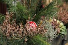 Weihnachtsfensterdekorationen mit Tanne, Heide, roter Ball Stockfoto