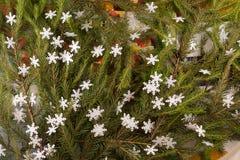 Weihnachtsfestliche Dekoration von Tannenzweigen, Schneeflocken Lizenzfreie Stockfotografie