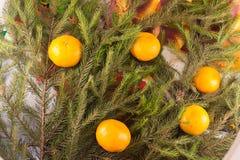 Weihnachtsfestliche Dekorationsdekoration von Tannenzweigen, Tangerinen Lizenzfreies Stockfoto