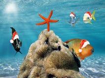 Weihnachtsfische im roten Weihnachtsmann-Hut Stockfotografie