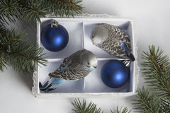 Weihnachtsgeschenk, kleiner Vogel zwei Lizenzfreies Stockfoto