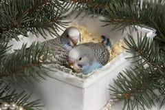 Weihnachtsgeschenk, kleiner Vogel zwei Stockbilder
