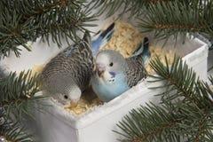 Weihnachtsgeschenk, kleiner Vogel zwei Stockfotografie