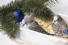 Weihnachtsgeschenk, kleiner Vogel zwei Stockfotos