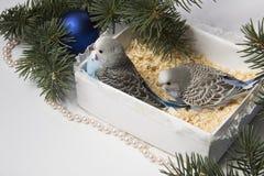 Weihnachtsgeschenk, kleiner Vogel zwei Stockfoto