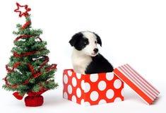Weihnachtsgeschenkwelpe Stockfotografie