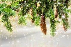 Weihnachtsgrüne Fichtenzweige mit Kegeln Stockfotos