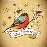 Weihnachtsgruß-Karte mit Dompfaffen Lizenzfreie Stockfotografie