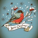Weihnachtsgruß-Karte mit Dompfaffen Lizenzfreie Stockfotos