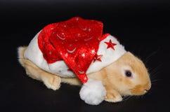 Weihnachtshäschen Stockfotografie